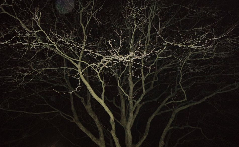 Dark Halloween Horror Moon Moonlight Tree Trees Forest Night Night Lights Shadow Blackandwhite Creepy Scary Moonshine Alone Nature Shine Plant Darkness And Light Cold Denmark Haunted Creepypasta Winter