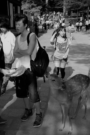 2013 Animal Themes Daim Day Lifestyles Nara,Japan One Animal Outdoors People Real People Standing Street The Photojournalist - 2017 EyeEm Awards The Street Photographer - 2017 EyeEm Awards Travel Photography Walking Young Adult