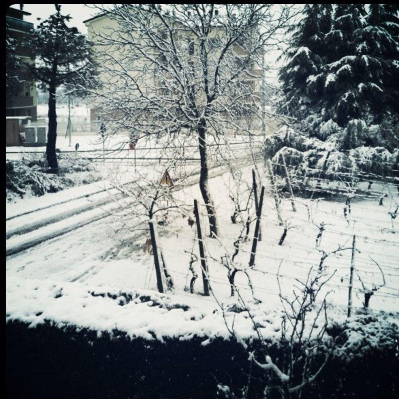 Voglia di neve Snow