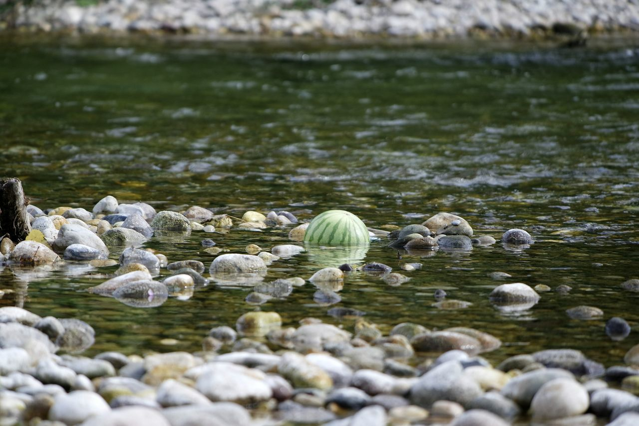 Showcase July Summer Fruits Water Melon On The River Natural Freshness! River Brenta Time Staying Cool Fruit In The Water Fruit Stones & Water Stones Water Close-up Green