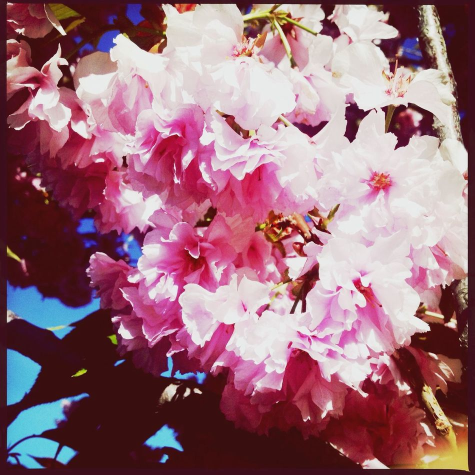 I'm sorry I was gone for so long!! Spring Has Sprung Going For A Stroll Pink Blooming
