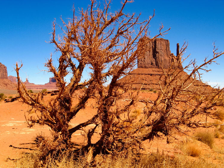 Bare Tree Monument Valley Rock Formation The Old West Eroded Mountain Rocky Mountains Sandstone Rocks Old West  Rocky Landscape Sandstone Eroded Rocks USA Wind Erosion Scenic Landscapes Geological Formations Western USA Natural Rocky Geological Formation Eroded Physical Geography