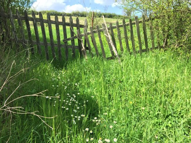 Beauty In Nature Day Field Grass Grassy Green Green Color Growing Growth Idyllic Landscape Lush Foliage Nature No People Non Urban Scene Non-urban Scene Outdoors Plant Remote Rural Scene Scenics Sky Tranquil Scene Tranquility Wooden Post