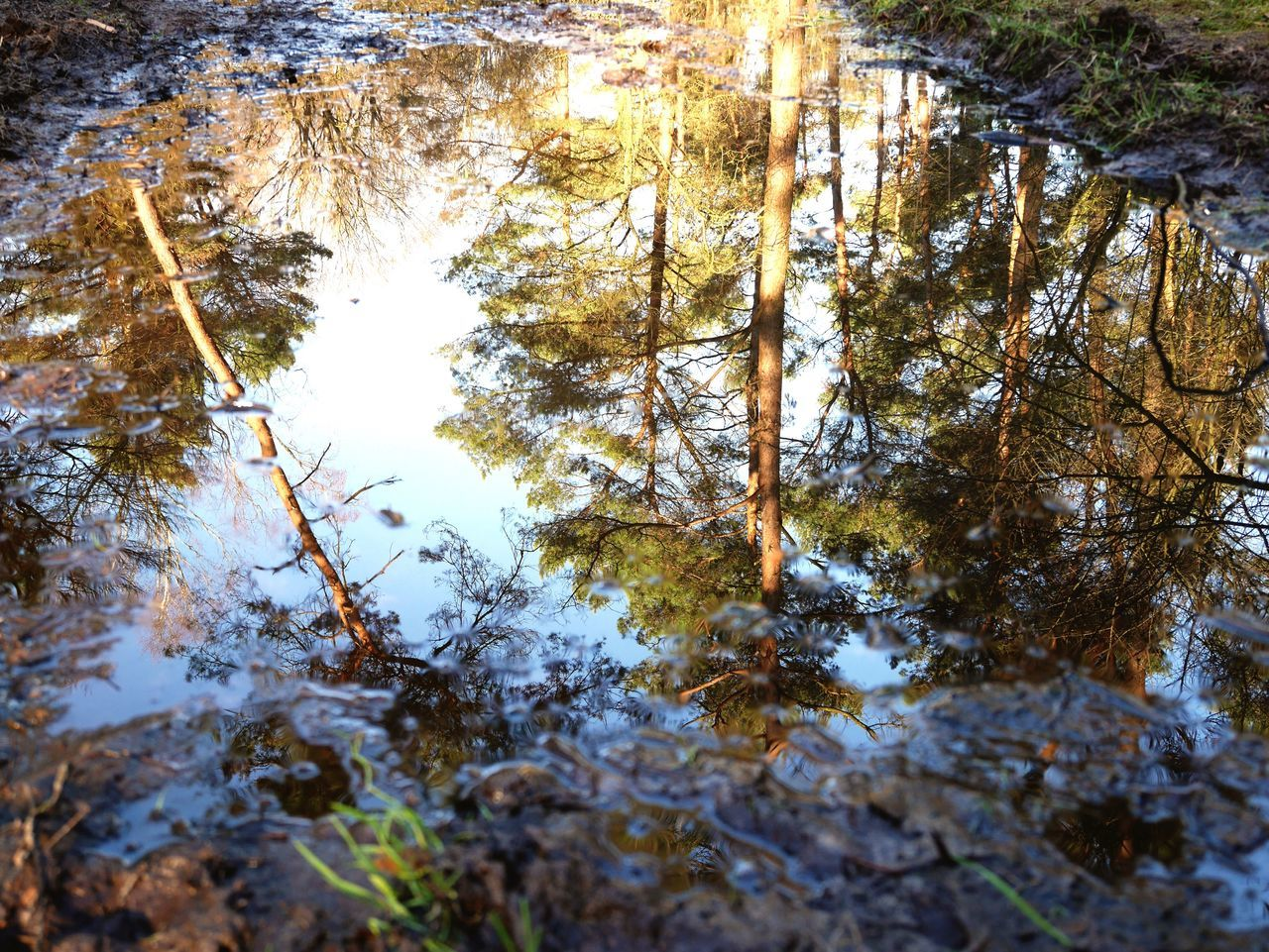 reflection, nature, water, tree, day, outdoors, tranquility, no people, lake, beauty in nature, forest, growth, puddle, close-up