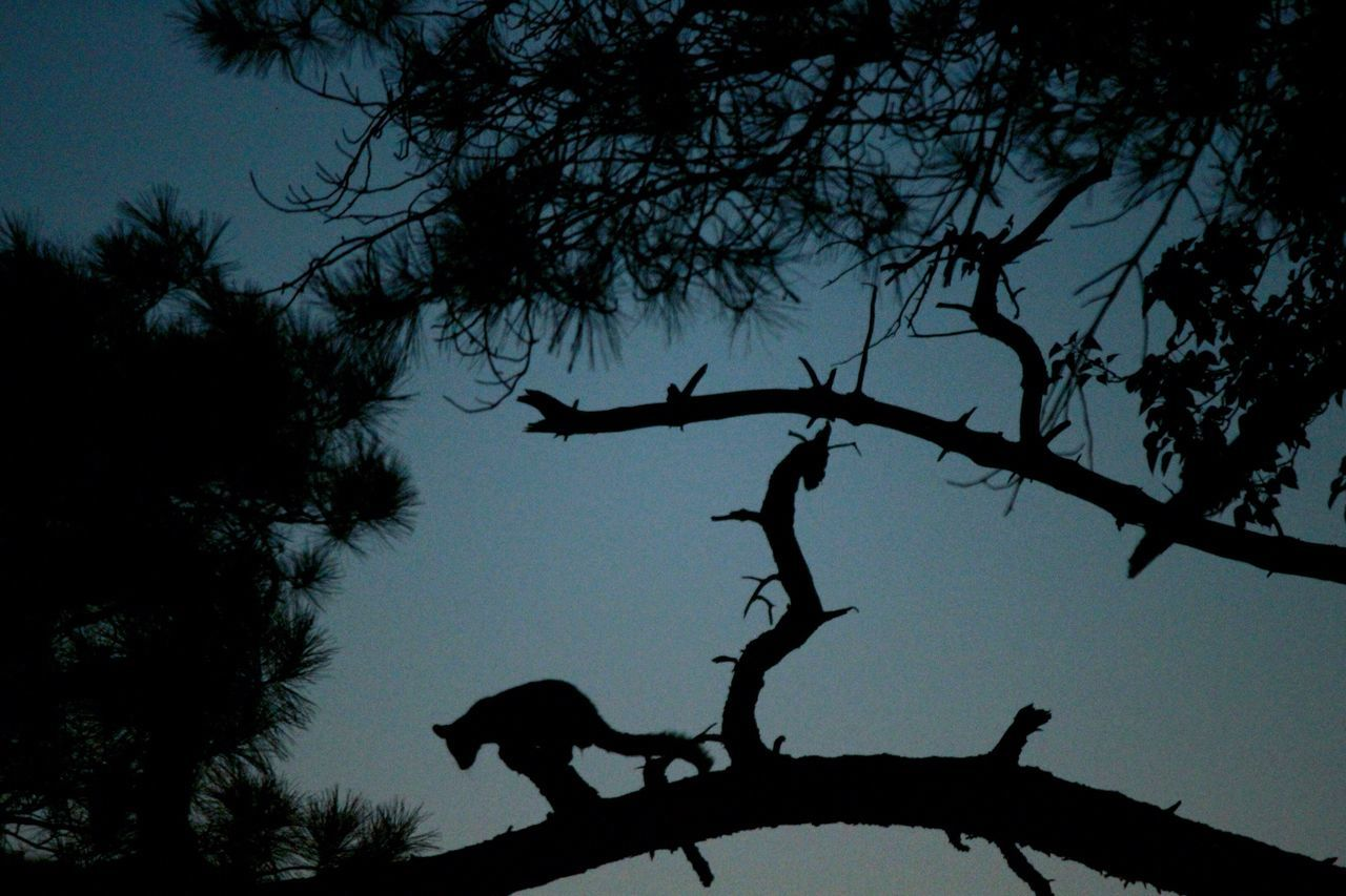 From the veranda. Possum Tree Silhouette Branch Nature Beauty In Nature Sky Tranquility Tranquil Scene Outdoors Animals In The Wild Australia Australian Wildlife Yarra Valley Warburton Sunset
