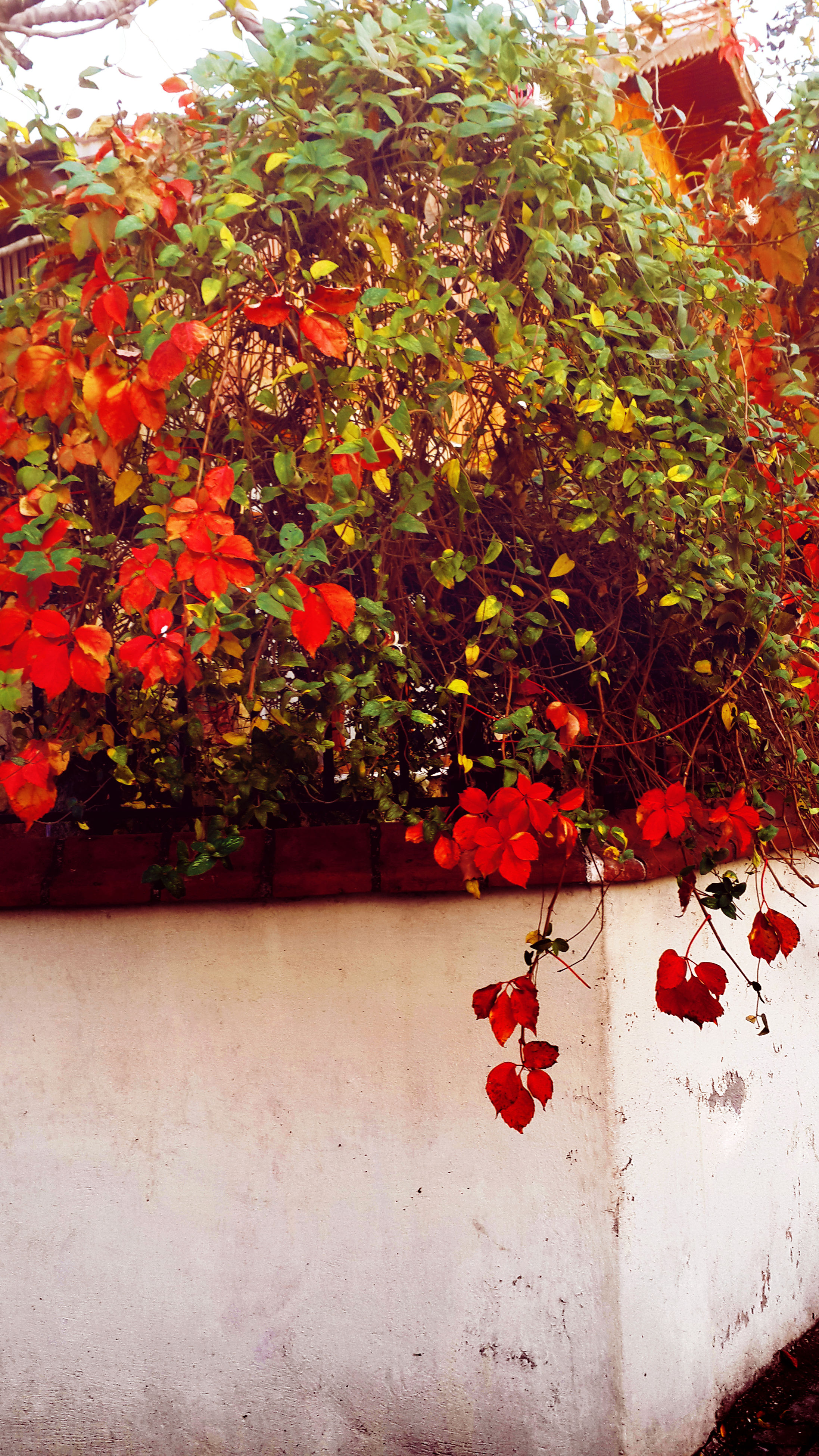 red, no people, growth, leaf, nature, day, plant, beauty in nature, outdoors, close-up, architecture, tree, freshness