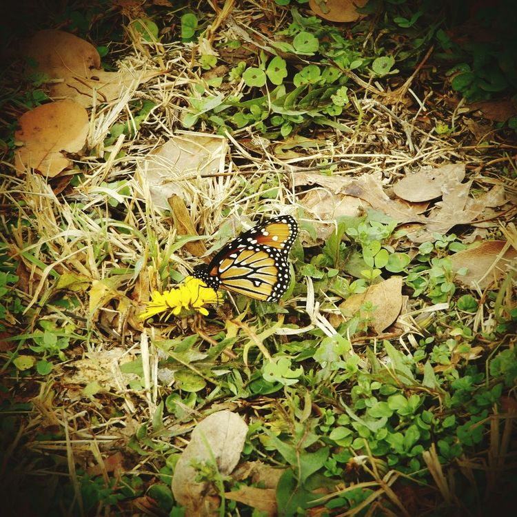 Nature Plant Growth No People Outdoors Fragility Day Grass Flower Leaf Beauty In Nature Animal Themes Close-up Freshness Monarch Butterfly On Flower.
