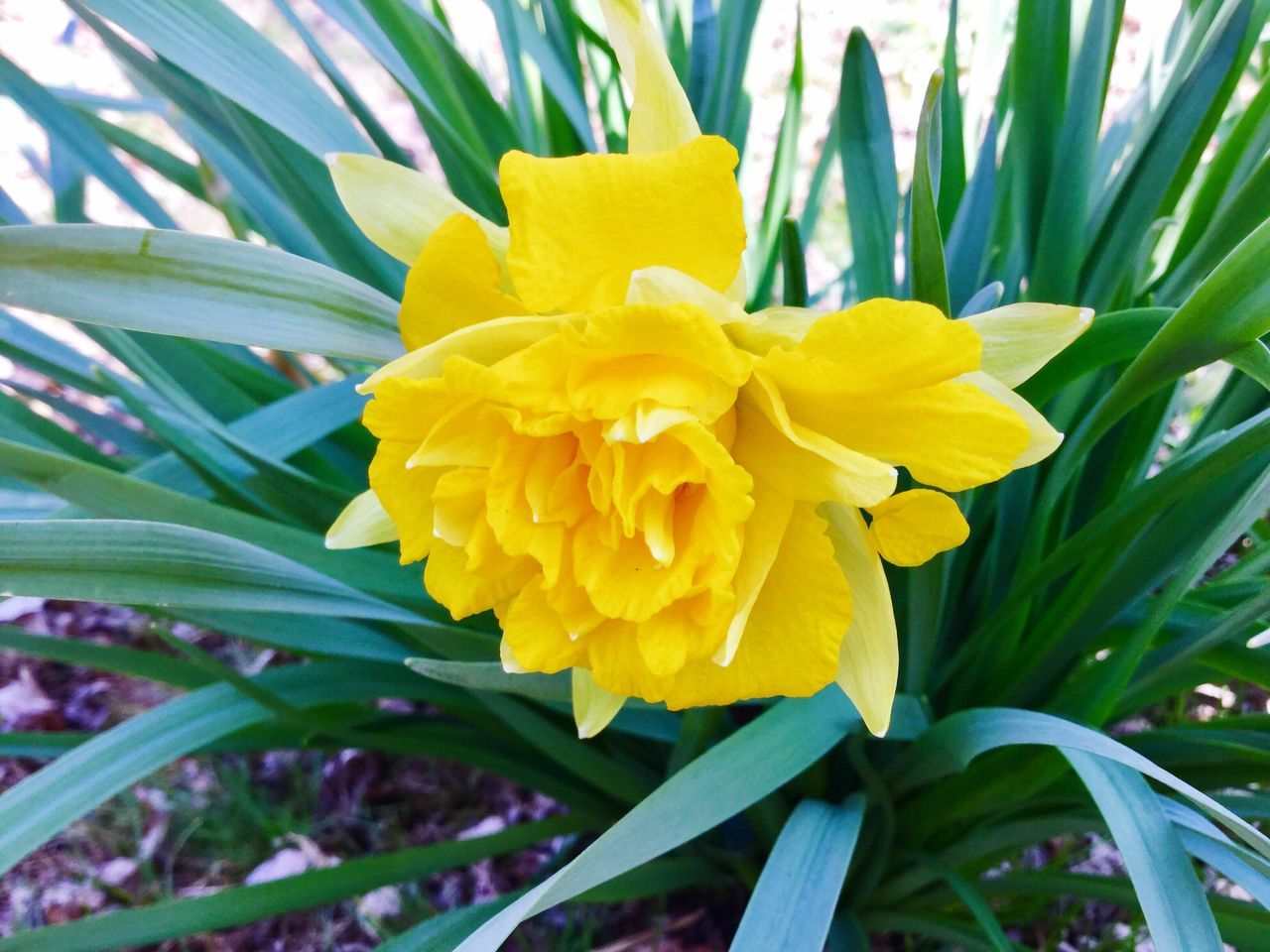 Nature Flower Yellow Growth Beauty In Nature Plant Blooming Close-up Day Outdoors