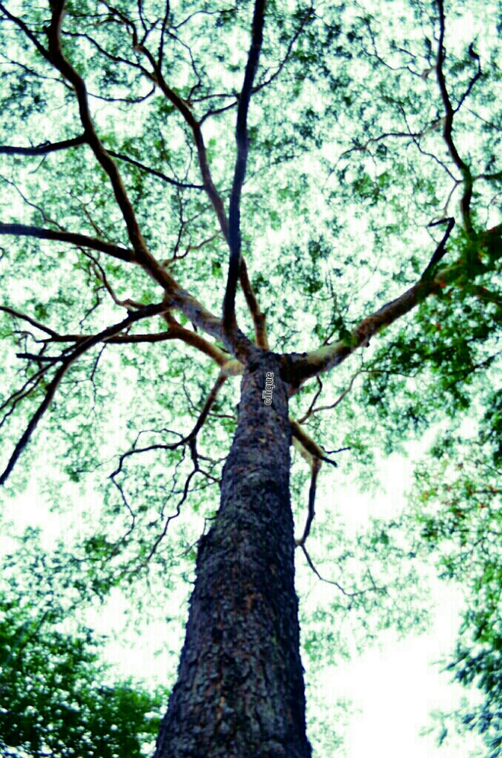 tree, low angle view, branch, tree trunk, growth, nature, tranquility, beauty in nature, sky, day, outdoors, backgrounds, no people, bark, forest, close-up, full frame, scenics, textured, sunlight