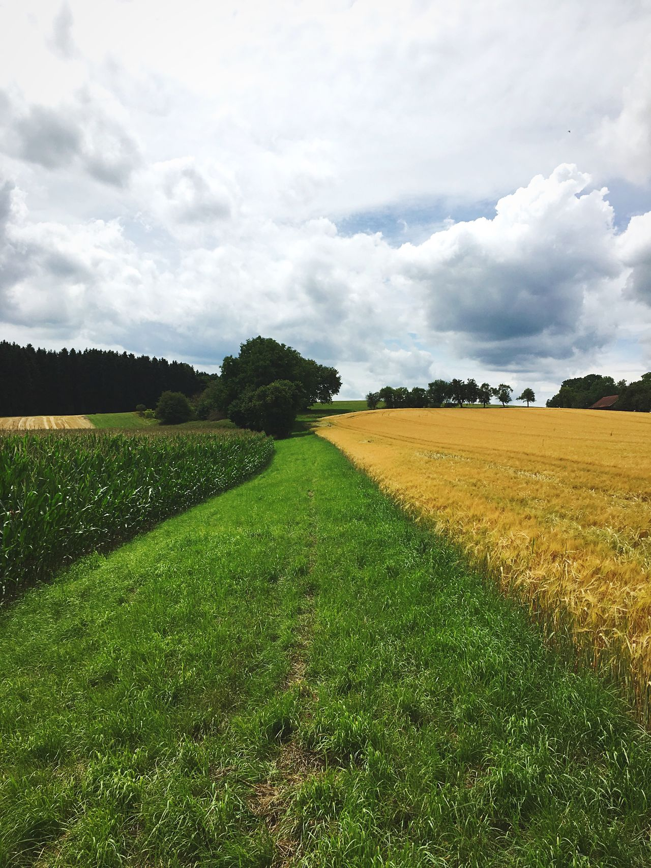 Field Agriculture Landscape Nature Tranquility Growth Tranquil Scene Rural Scene Beauty In Nature Crop  Sky Cloud - Sky Day Scenics No People Green Color Outdoors Grass Tree