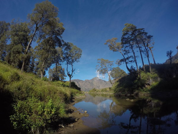 Rinjani Mountain, Lombok, Indonesia Agushariantophotography Beauty In Nature Blue Day Growth Lake Landscape Nature No People Outdoors Reflection Rinjani Mountain Scenics Segara Anak Lake Sky Tranquility Tree Water