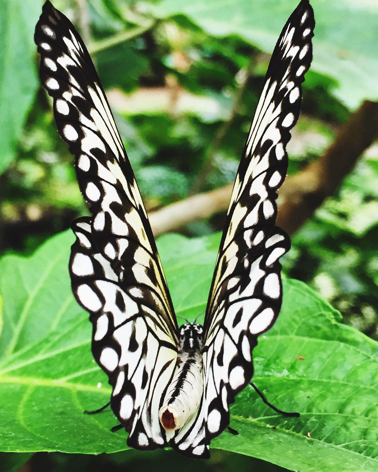 First Eyeem Photo Butterfly Papilorama