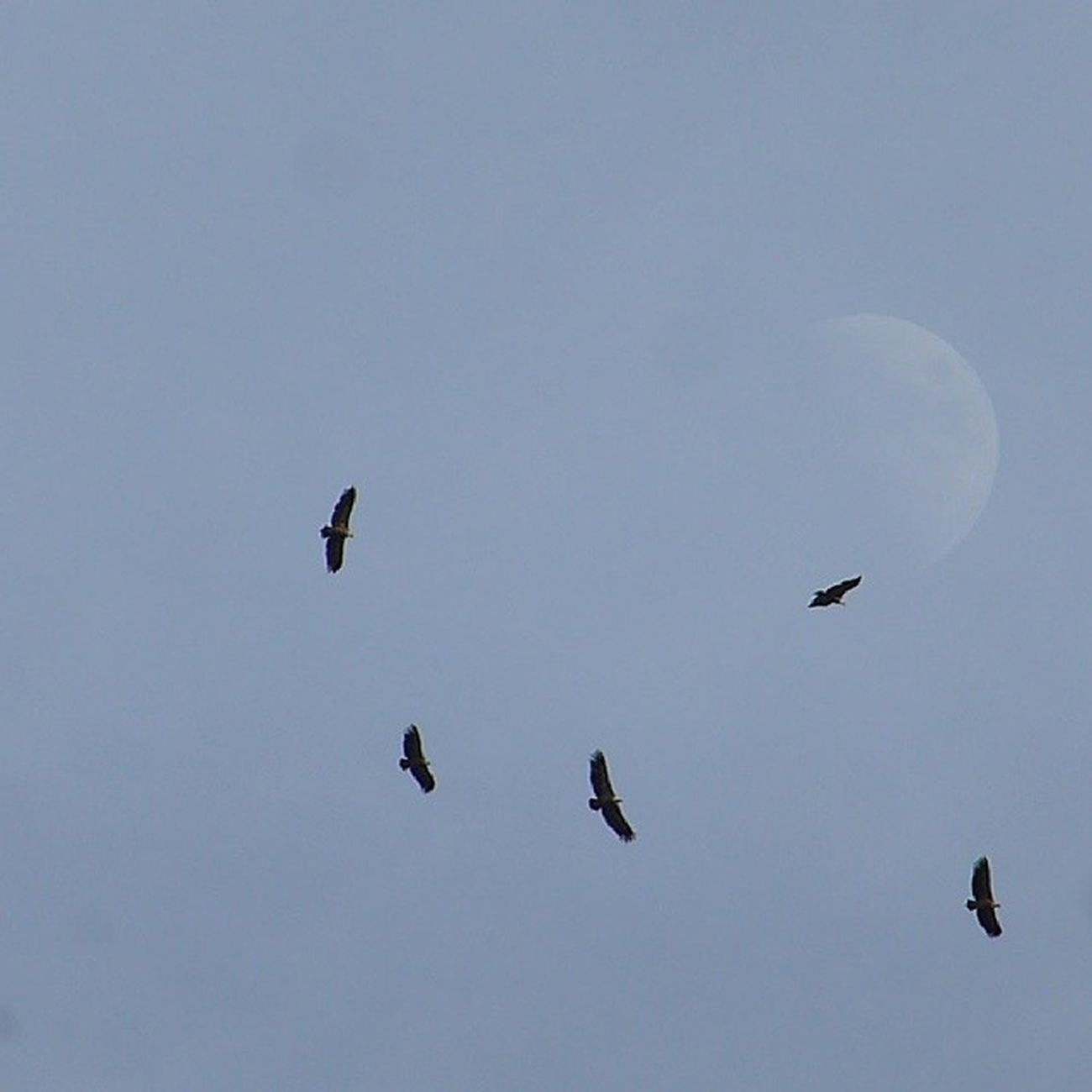 A vueltas con la Luna. Skylovers Bird Lunalunera Travel Cuenca