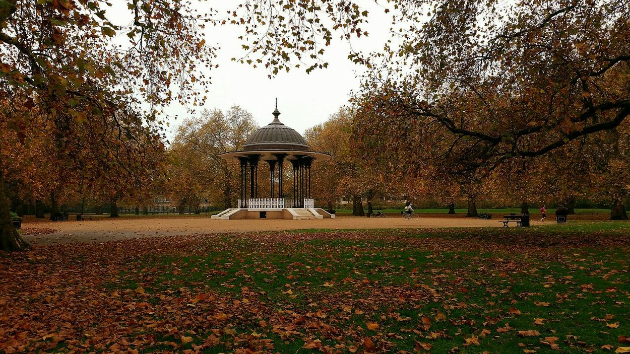 Bandstand in a London Park with Seasonal Colors Colours of Autumn Turning to Winter from Leaves Trees and Grass also people Exercising Before Work or On Way To Work Pmg_lon