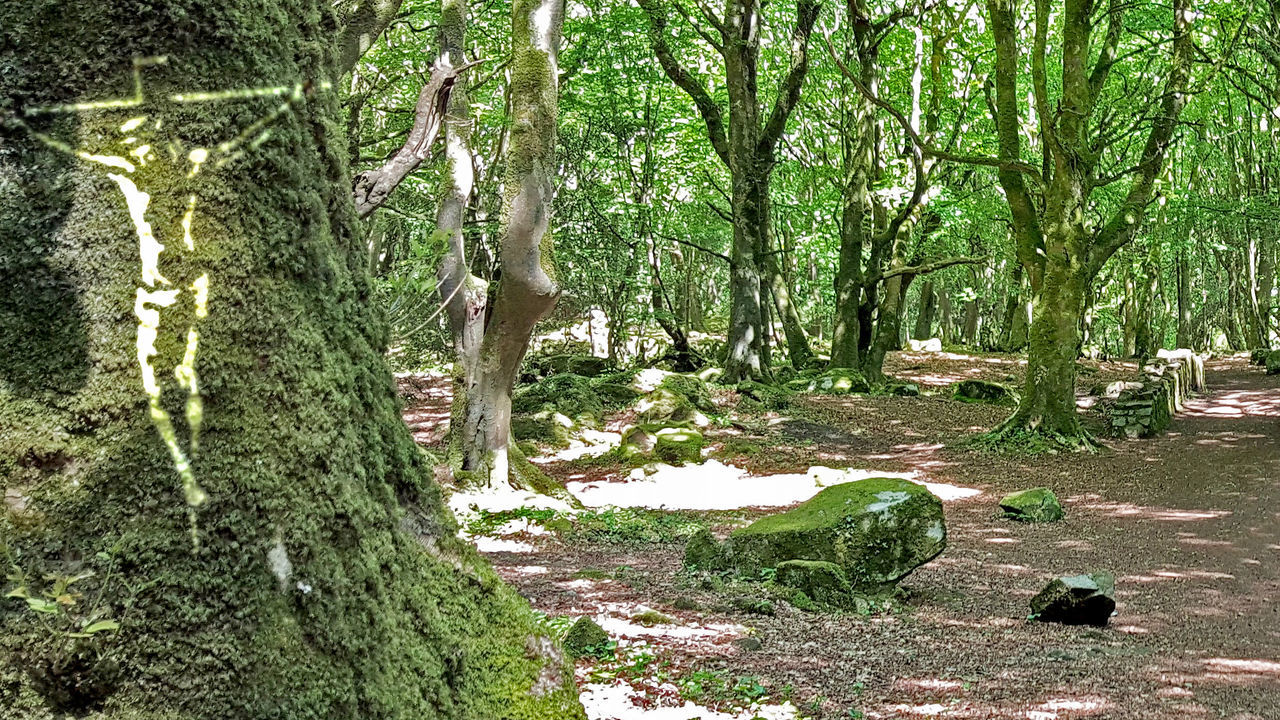 Jesus apparition Barna Woods Beauty In Nature Crusifiction Crusified Forest Galway God Gods Beauty Jesus Nature Peace Tranquil Scene Tranquility Tree Ireland🍀 Galway City Awareness Heaven Heavenly Afterlife