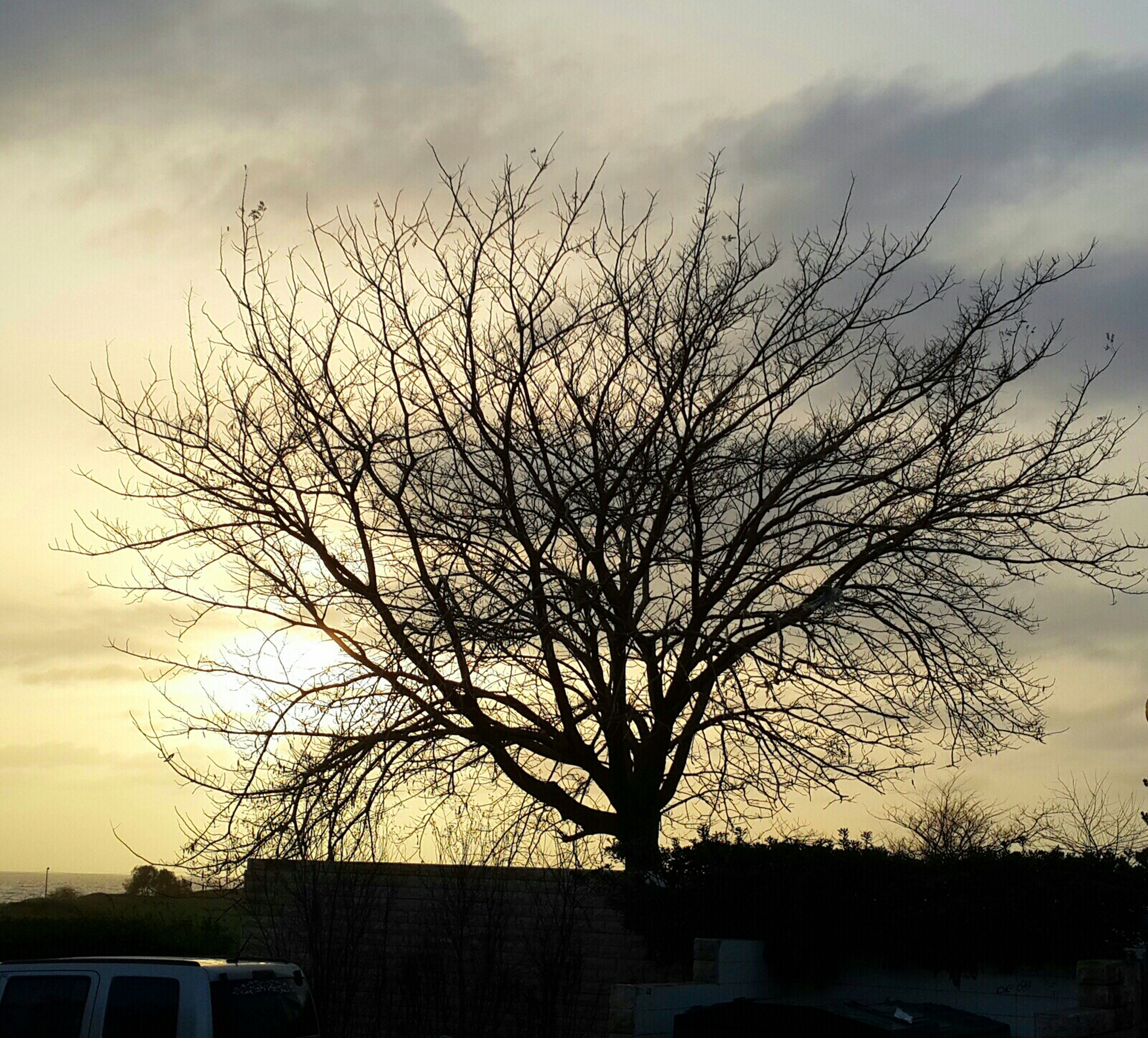 bare tree, tree, sky, silhouette, branch, sunset, building exterior, cloud - sky, built structure, architecture, low angle view, nature, cloudy, house, cloud, outdoors, tranquility, no people, beauty in nature, dusk