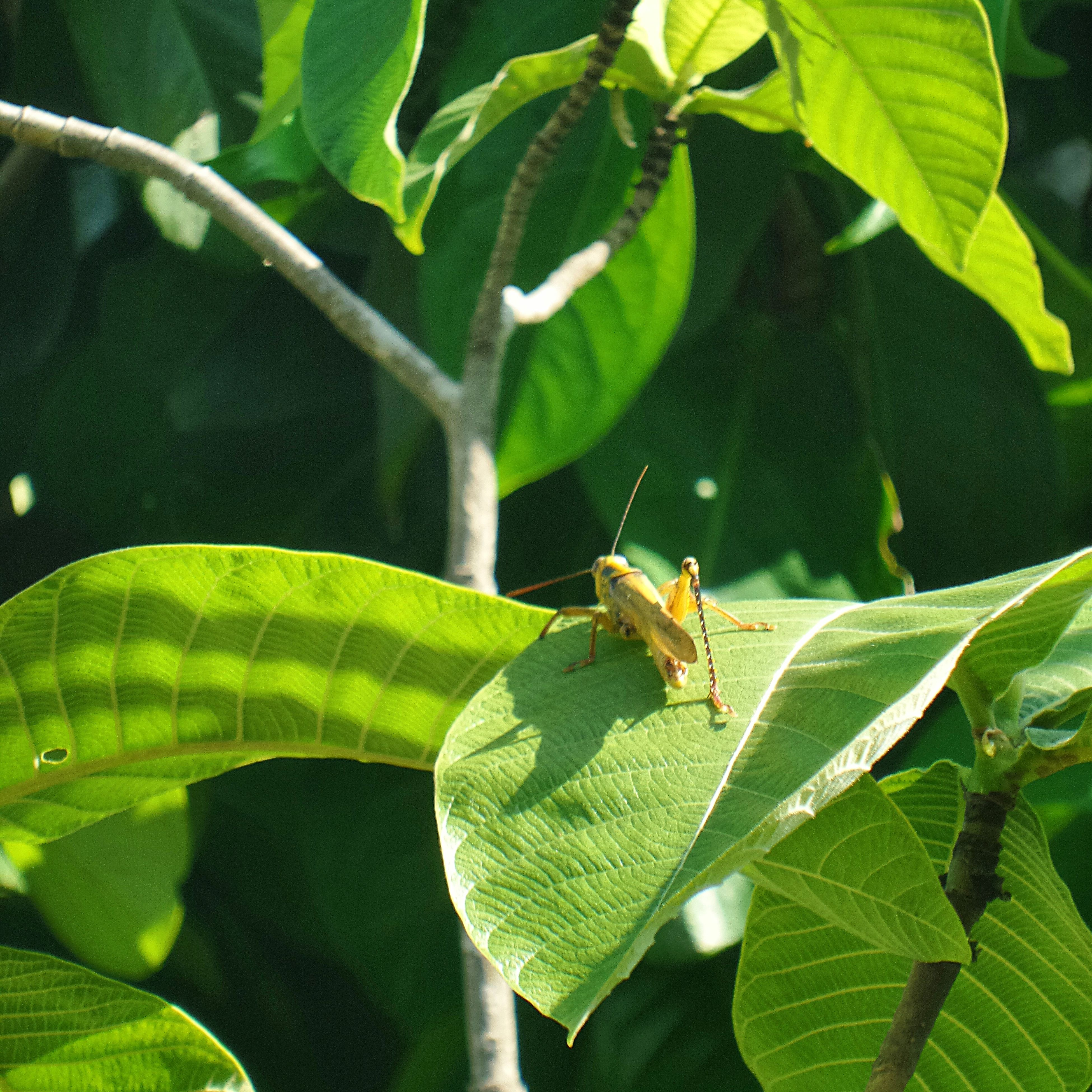 animal themes, animals in the wild, leaf, one animal, wildlife, green color, insect, branch, nature, plant, growth, perching, tree, close-up, outdoors, day, two animals, no people, focus on foreground, full length
