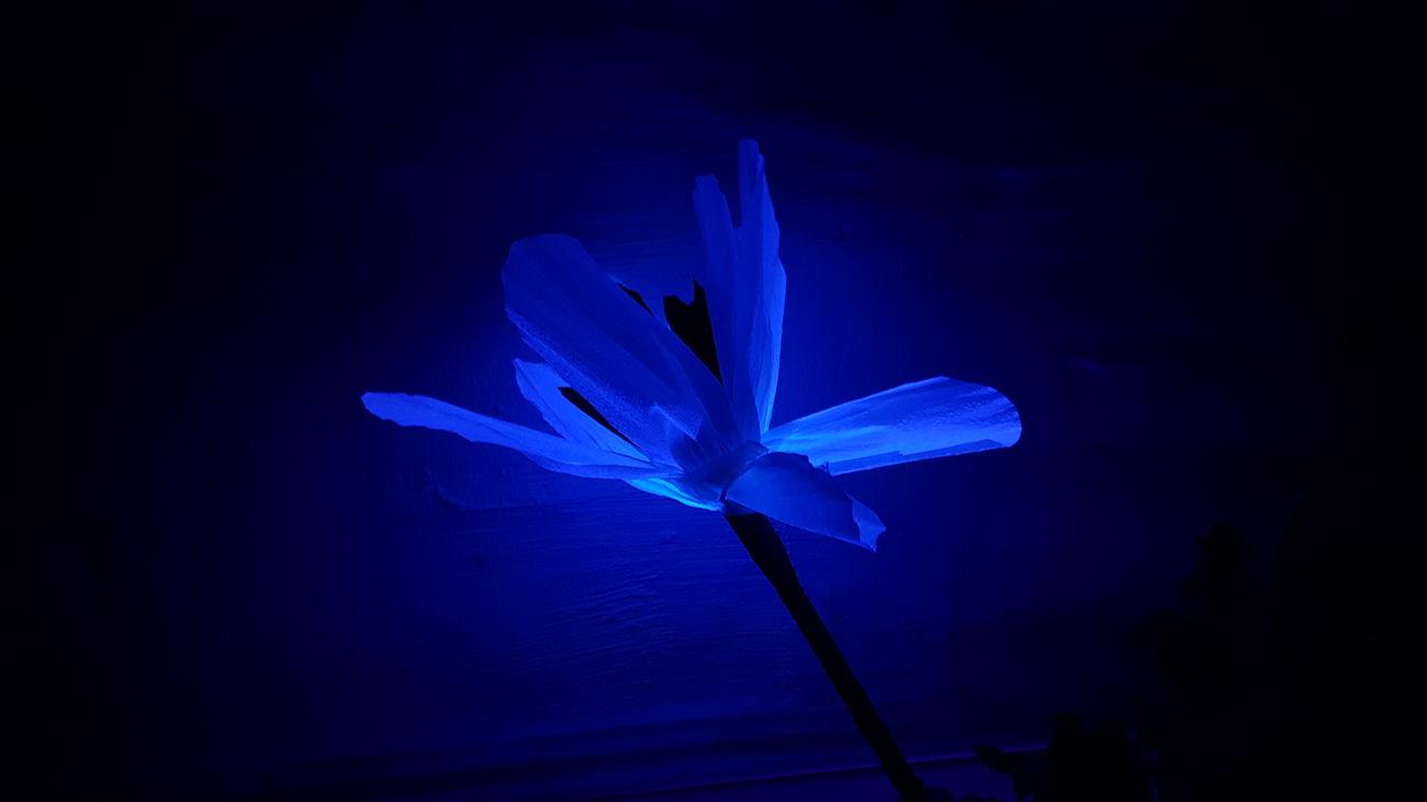 Cavaret Flower Neon Lights Blue Flowers Nature Lover Nature Photography Fake Flowers