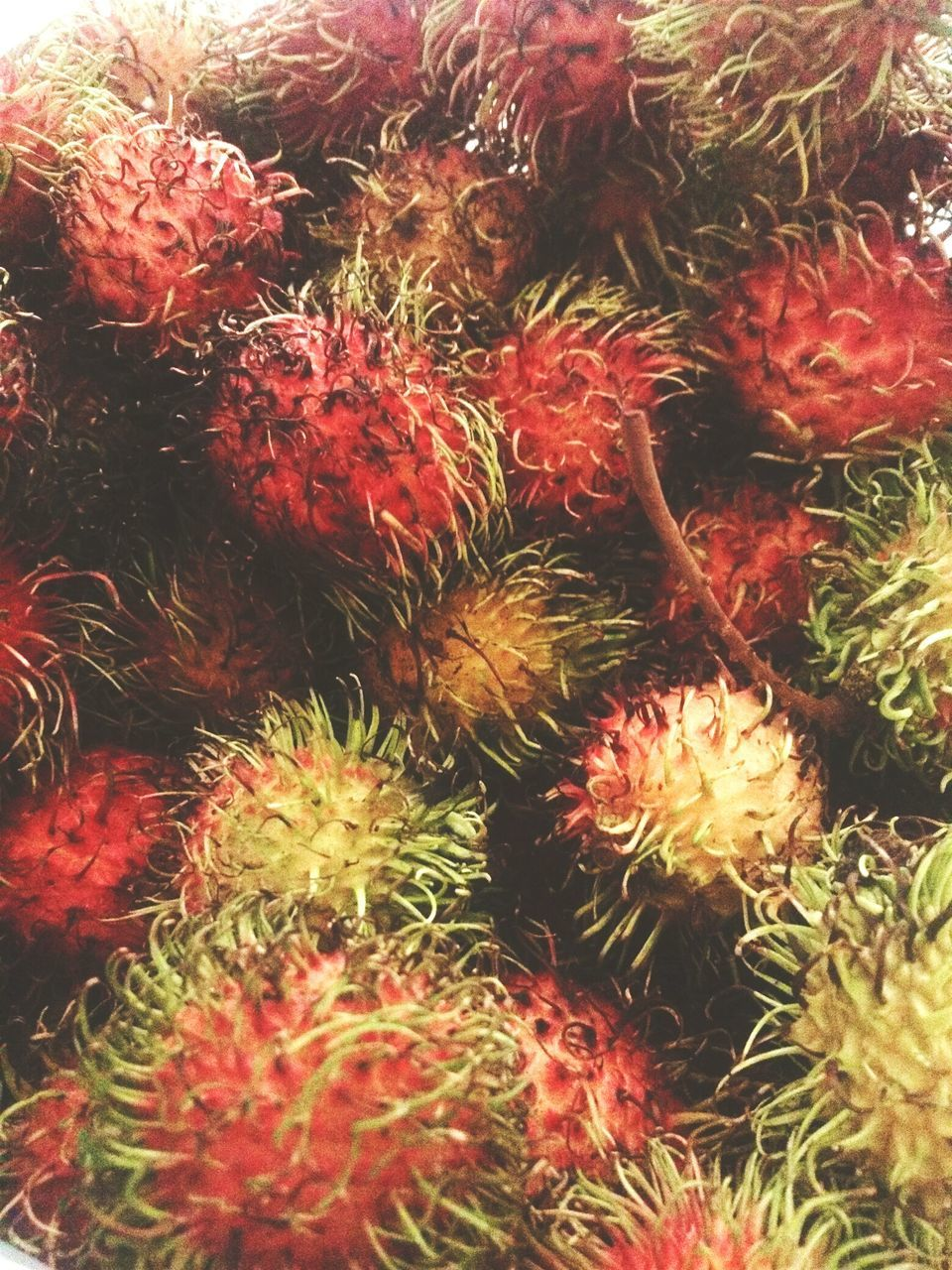 cactus, freshness, red, no people, nature, growth, plant, food and drink, backgrounds, full frame, beauty in nature, fruit, close-up, food, outdoors, day, healthy eating