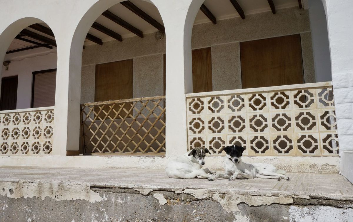 Dogs Morning Light Wihte Dogs Enjoying Life Animals Pet Sit Sunbathing☀ Day Nopeople