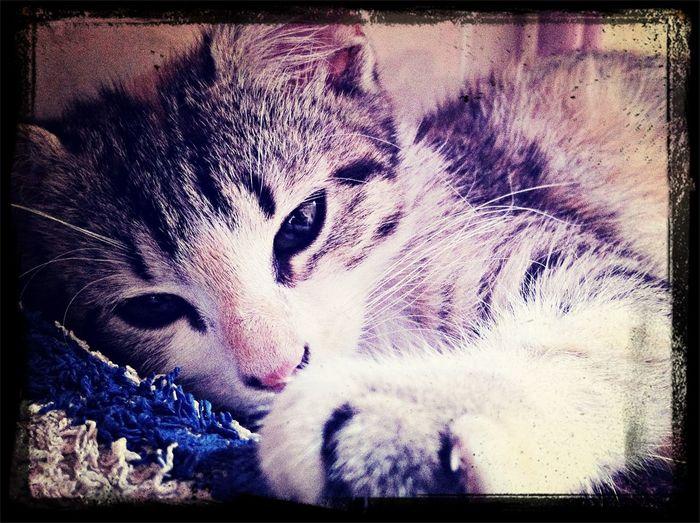 mon chat le plus beau ❤️❤️