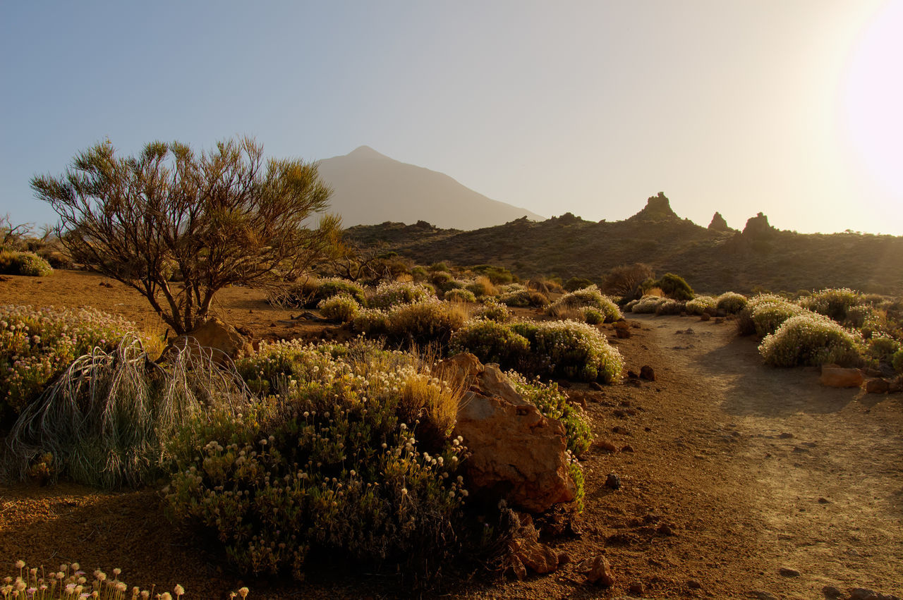 Landscape on Teide Astronomy Beauty In Nature Burning Mountain Day Growth Landscape Mountain Nature Nature Nature Photography Nature_collection No People Outdoors Rock Scenics Sky Sun Sunset Teide Teide National Park Teide Volcano Teide❤ Teneriffa Tree Vulcan