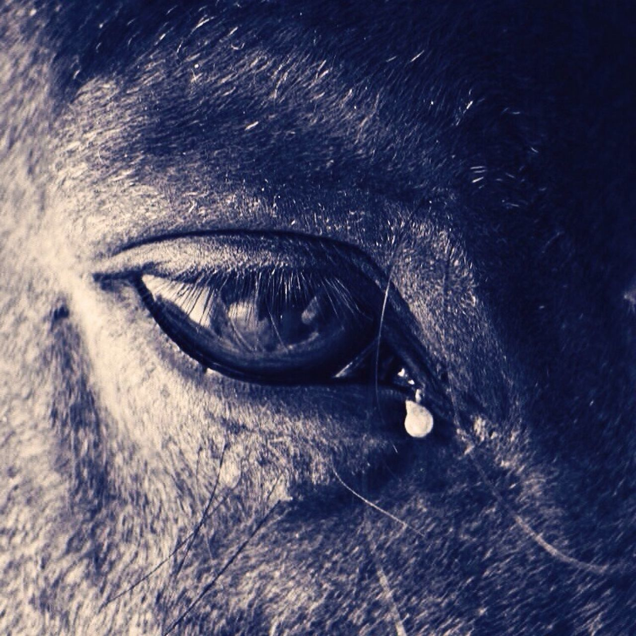 Close-Up Of Horse Crying