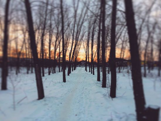 Winter Snow Cold Temperature Nature Tree Beauty In Nature Tranquility Bare Tree Tranquil Scene Scenics Weather Landscape Sunset No People Frozen Outdoors Tree Trunk Forest Day Sky 🌌
