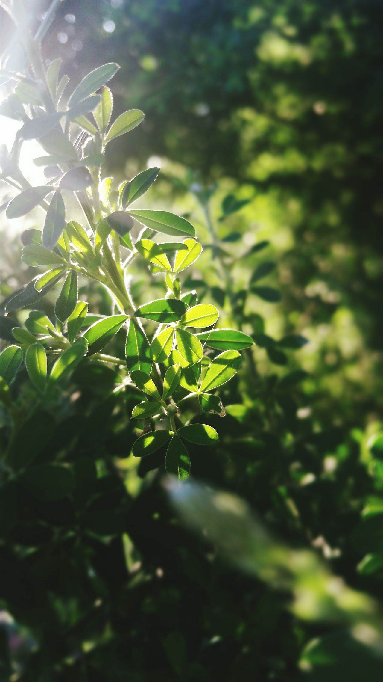'Summer time sadness' - Taminick Brooks Summer Summertime Summer ☀ Summer Vibes Summer Memories 🌄 Summer2016 Green Green Green Green!  Green Leaves Green Nature Nature Nature Photography Nature On Your Doorstep Leaves🌿 Sunlight And Shadow First Eyeem Photo