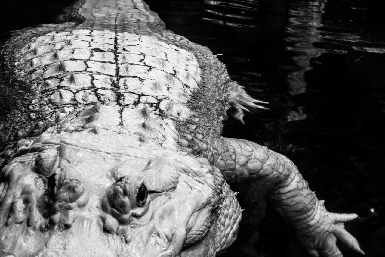 Forget the dog, beware the gator! BeautyintheDetail Eye4black&white  EyeEm Best Shots - Black + White Bw_collection