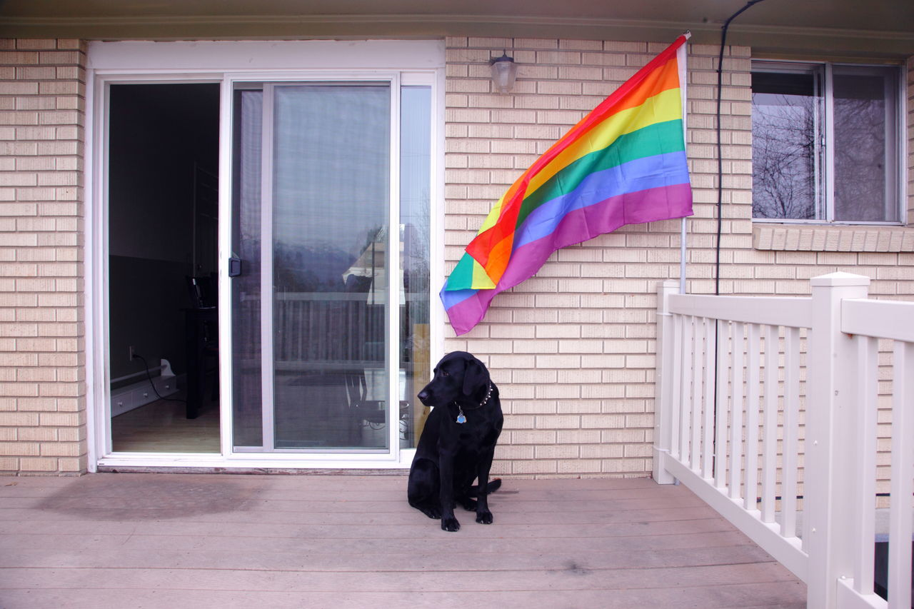 Animal Themes Building Exterior Day Family Flag Gay Home House Lesbian Lgbt Multi Colored No People One Animal Outdoors Pets Rainbow