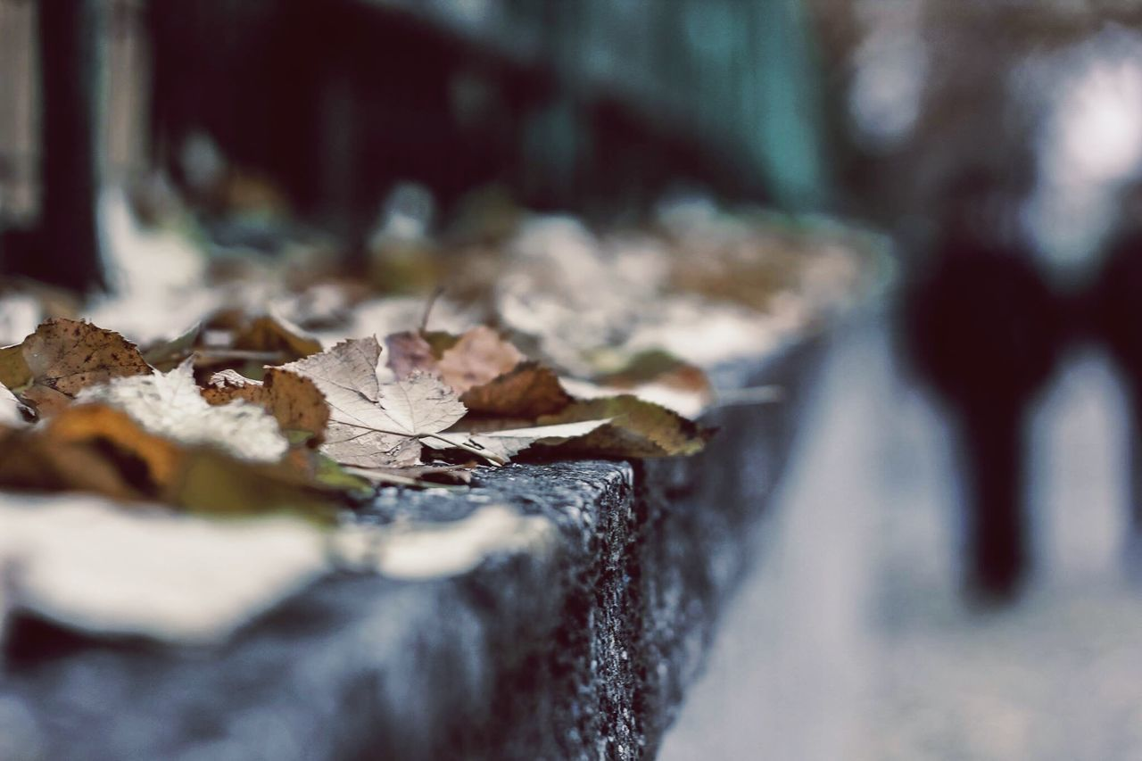 Close-Up Of Dry Leaves On Retaining Wall