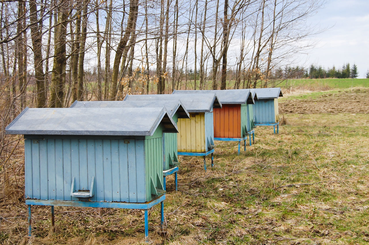 Bee Hives Farm Poland Apiary Bee Hives Hive Landscape Tree Wooden