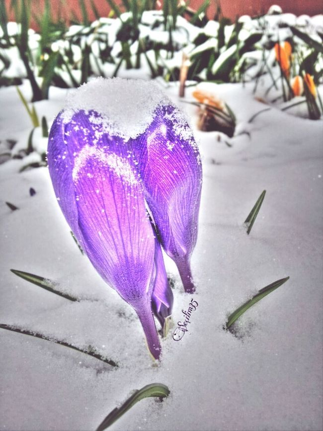 Happy Easter :) Enjoying Nature Snow Nature Makes Me Smile Nature_collection EyeEm Nature Lover