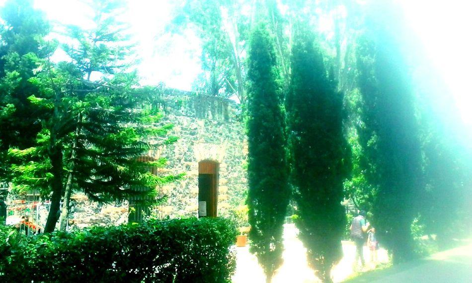 Enjoying LifeEnjoying Life Moments Mexico City Colores De La Naturaleza Nuve De Azucar Hacemos Colores Arboles , Naturaleza Pino Pinoyphotography