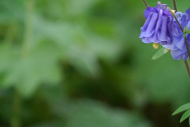 Blumenpracht🌺🍃 Katzenfoto Nature Nature Photography Nature_collection Planzen See The World Sommer Sonne