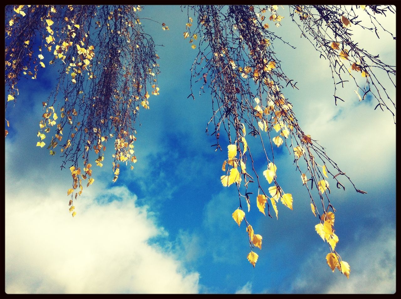 Treetop with autumn leaves against cloudy sky