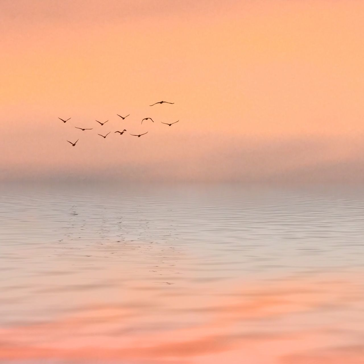 Tranquil Scene Pastel Power Pastel Colors Tranquilo (: Tranquil Ocean Horizon Over Water Daylight Birds Landscape Landscape_Collection Landscape_photography Beautifully Organized