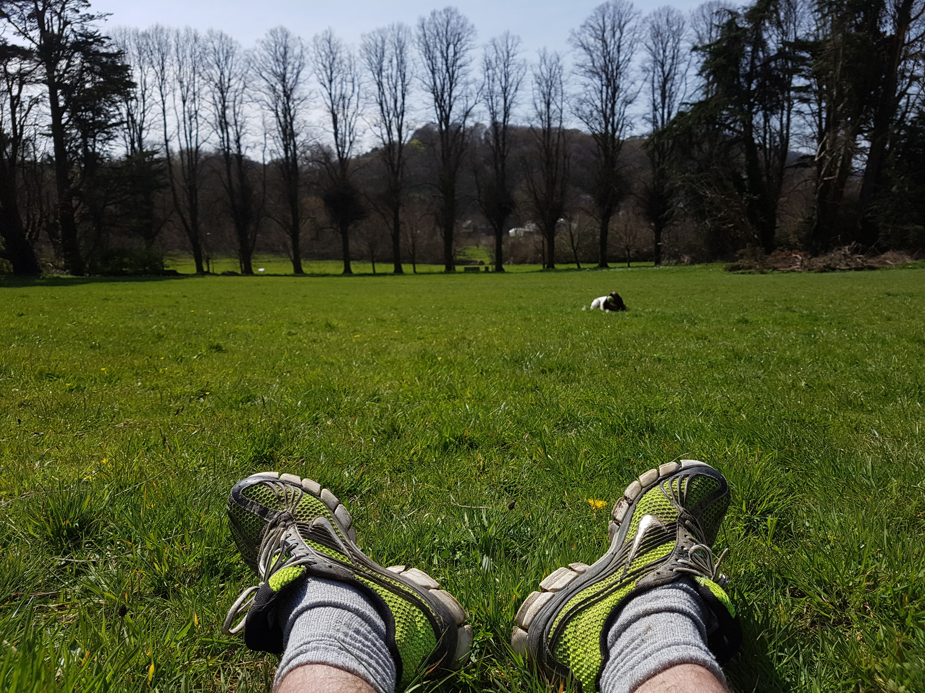 grass, low section, person, personal perspective, grassy, field, green color, shoe, tree, unrecognizable person, leisure activity, men, lifestyles, animal themes, landscape, nature, one animal
