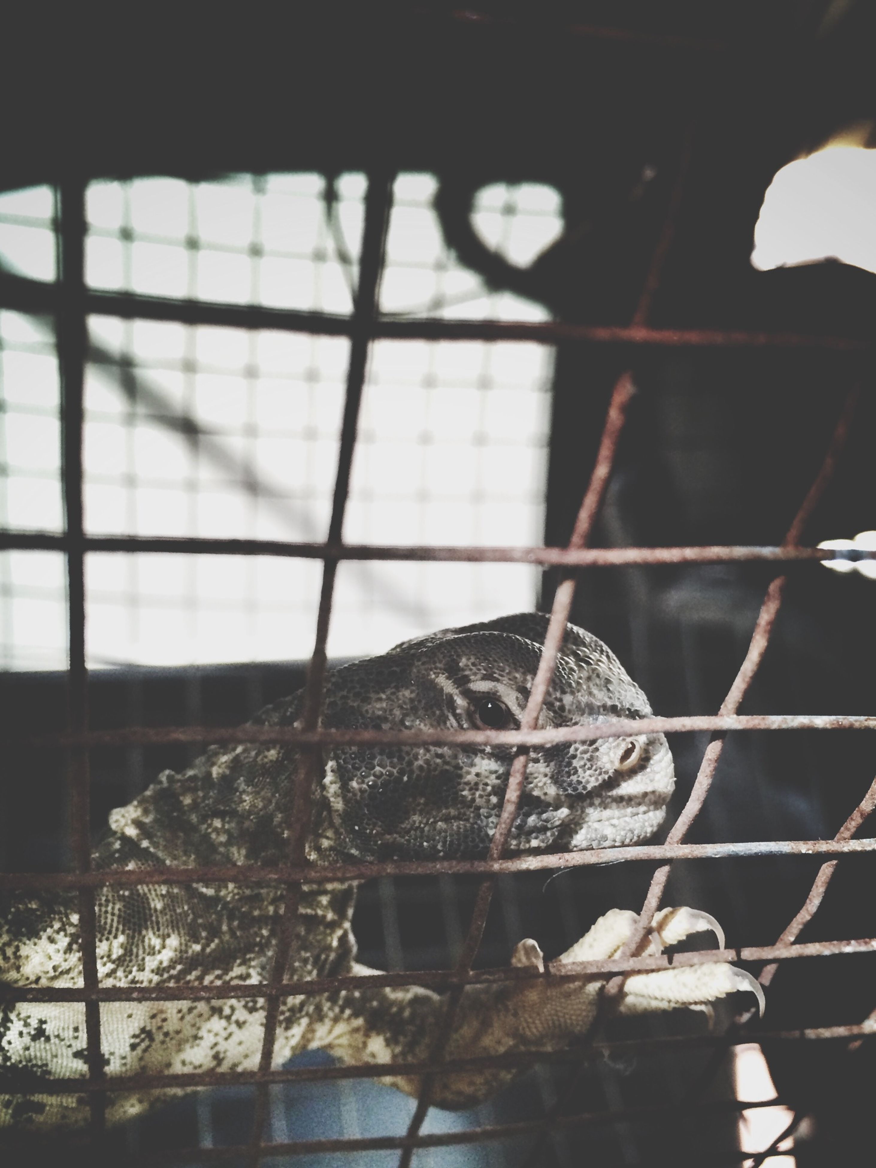 indoors, metal, close-up, metal grate, window, fence, focus on foreground, pattern, metallic, abandoned, damaged, day, no people, built structure, chainlink fence, cage, glass - material, broken, wall - building feature, old