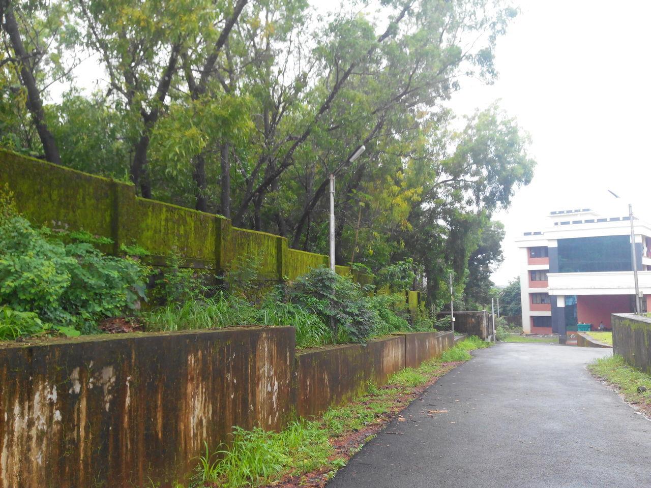 Green Nature Green Hostel Walls Just Rained Inlove♥