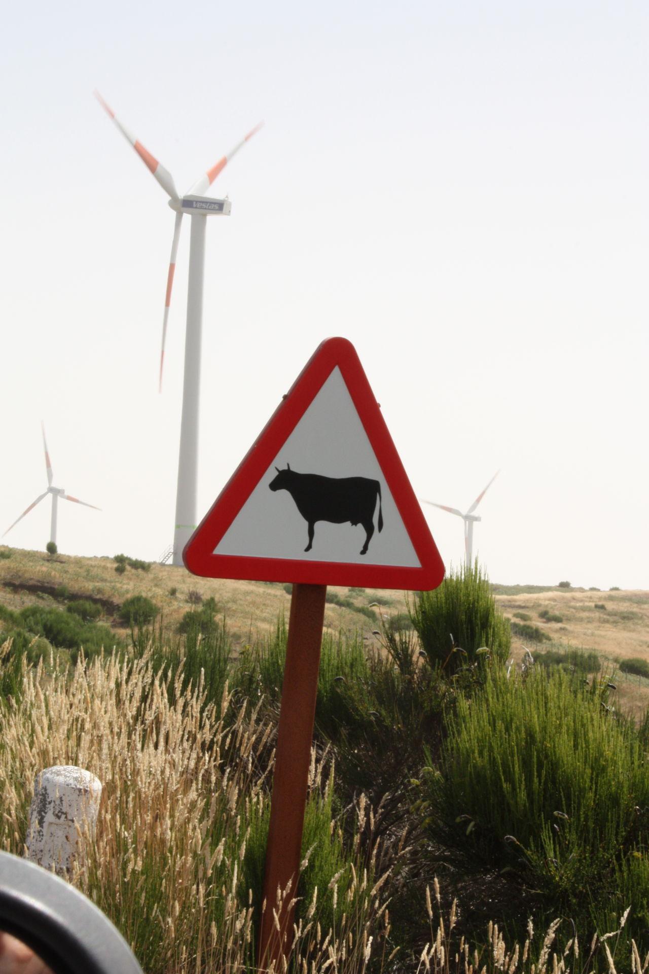 Beautiful stock photos of cow, Alternative Energy, Animal Representation, Clear Sky, Close-Up