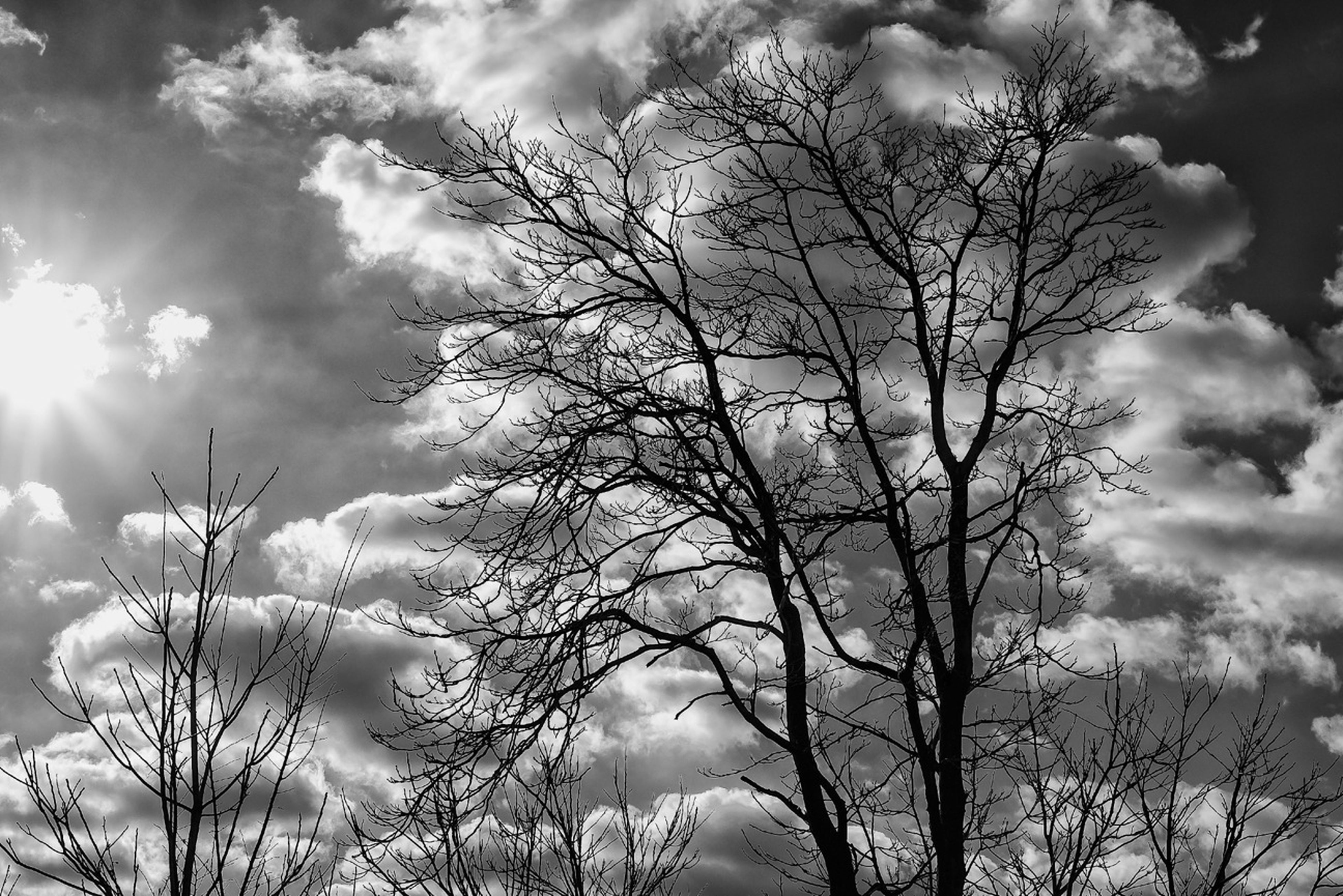 bare tree, sky, low angle view, tree, branch, cloud - sky, tranquility, cloudy, beauty in nature, nature, silhouette, scenics, tranquil scene, cloud, sun, sunlight, outdoors, no people, growth, sunbeam