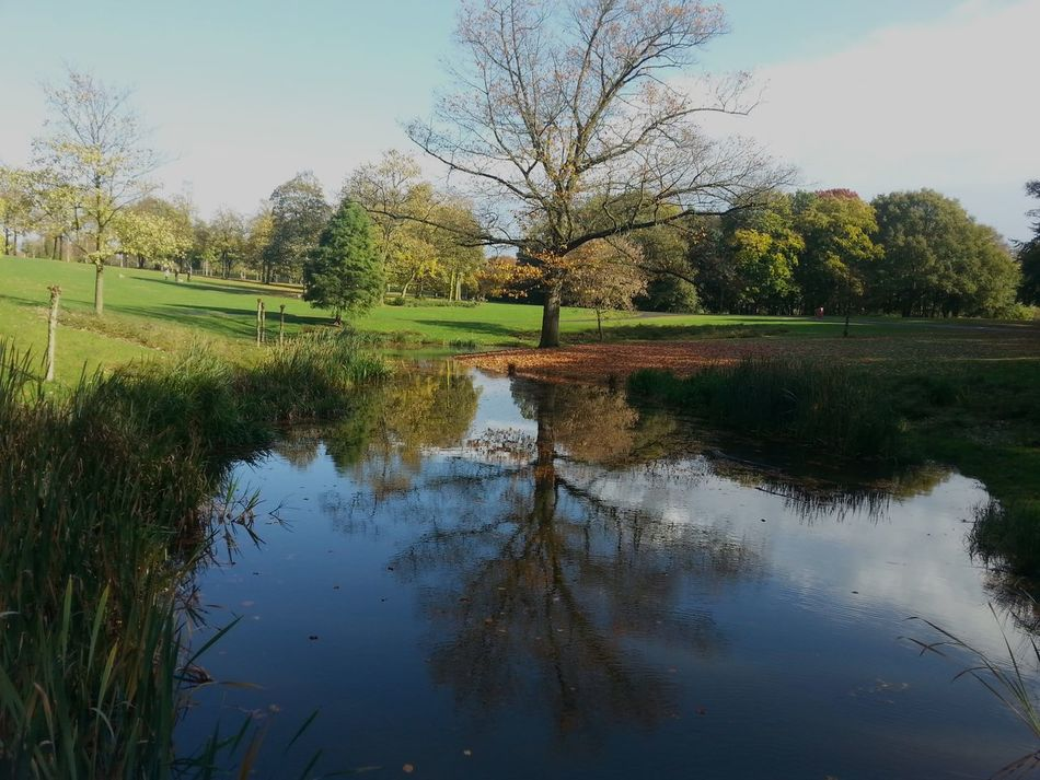 Autunm Beauty In Nature Day Grass Growth Lake Nature No People Outdoors Parks Parks And Recreation Parkscapes Reflection Scenics Sky Tranquil Scene Tranquility Tree Water