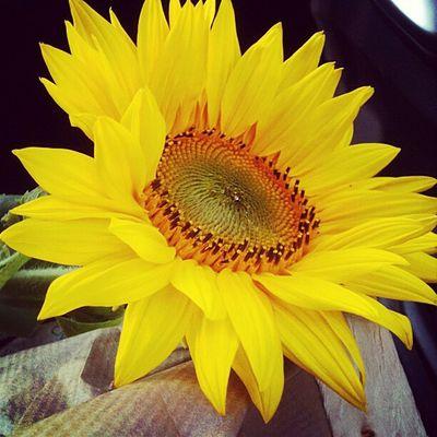 Sunflower Yellow Flowers Eeyem Nature Lover Nature