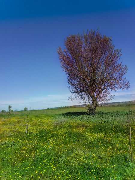 Beauty In Nature Picoftheday Nature Natureporn Tree Flowers Landspace Mothernature Green Spring Nofilter