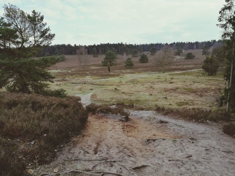 Heide Landscape Buchholz Germany🇩🇪 Outdoors Day No People Nature Beauty In Nature