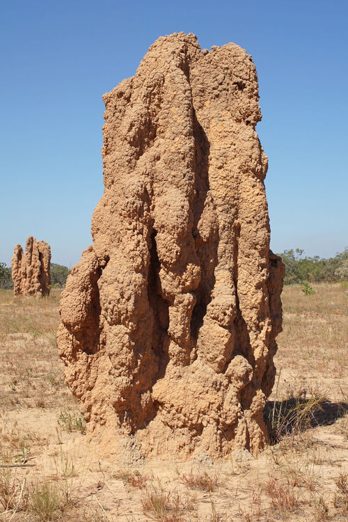 Termite mound, Kakadu National Park, Australia Australia Day Down Under Fauna Insects  Kakadu National Park Landscape Nature No People Northern Territory Outback Outdoors Rock - Object Scenery Scenics Termitarium Termite Mound Termite Nests Termites Top End Tourism Travel Travel Destinations Vacations Wildlife,