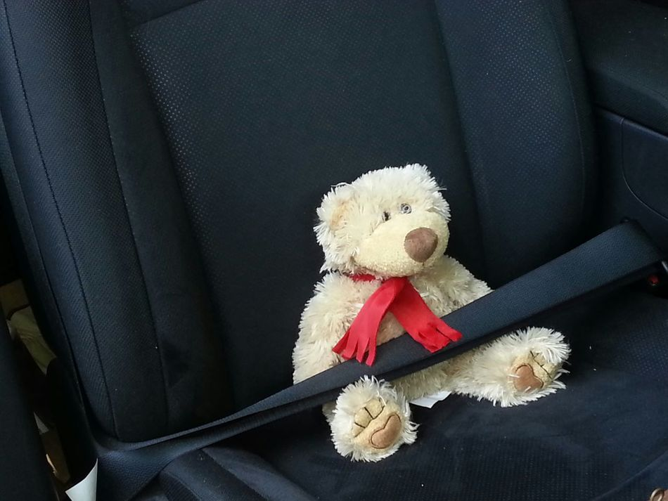 Beautiful stock photos of teddy bear, Animal Representation, Black Color, Buckle, Car