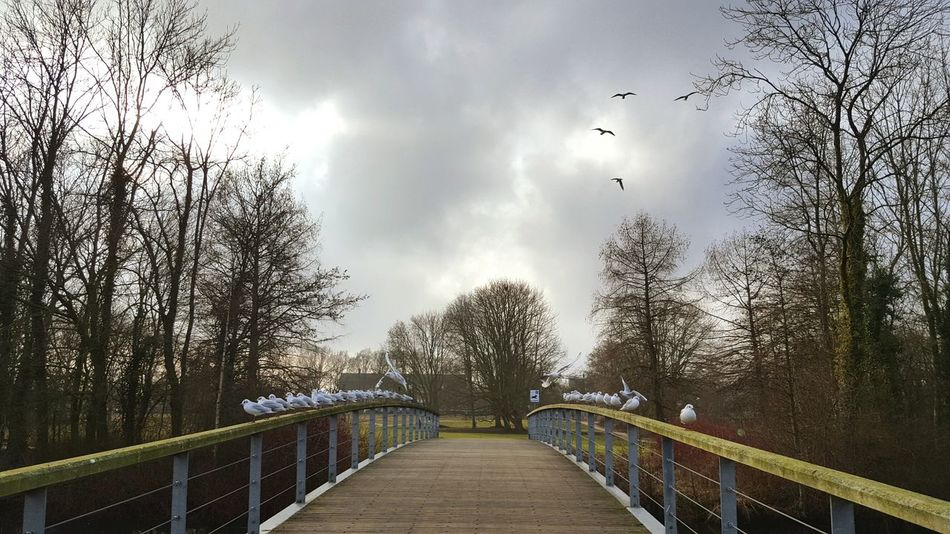 Tree Outdoors Bridge - Man Made Structure No People Sky Day Tree_collection  Cluodporn Nederland Zwolle Bird Photography Birds Of EyeEm  Birds Animals In The Wild Birds Of EyeEm  Cloud - Sky Water_collection EyEmNewHere Mid-air Motion Bird Of Prey Animal Themes Spread Wings Flock Of Birds Flying